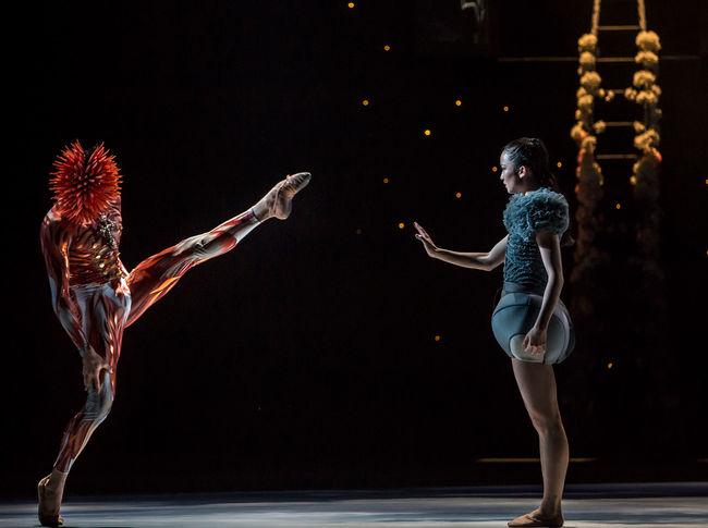 Ballet du Grand Théâtre de Genève, Casse-Noisette de Piotr Illitch Tchaïkovski, novembre 2014. Chorégraphie : Jeroen Verbruggen.  Nahuel Vega (Le Prince des Noix) et Sara Shigenari (Marie)